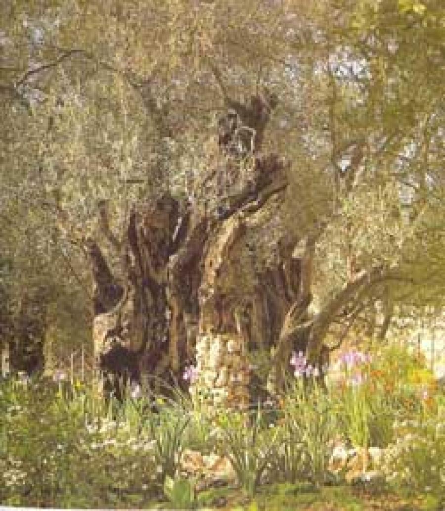 La oración de Jesús en el Getsemaní